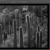 Black and White Photo Processing: Photoshop Course