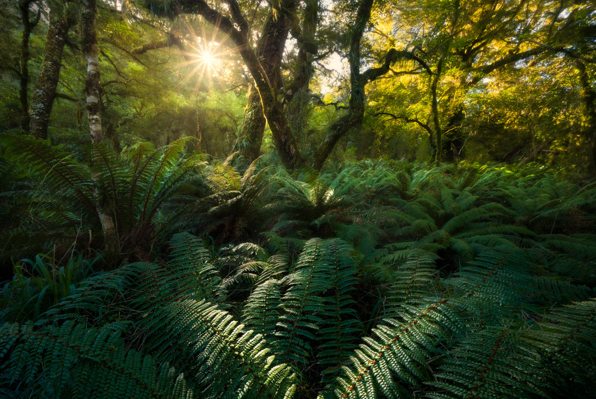 William Patino Interview